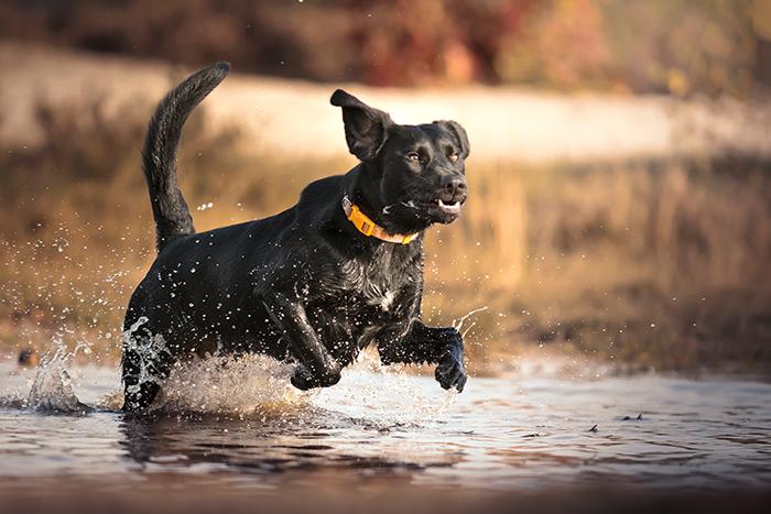 Aanmeld hond foto